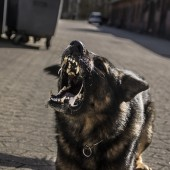 hund_medieskolen_lyngby_2015